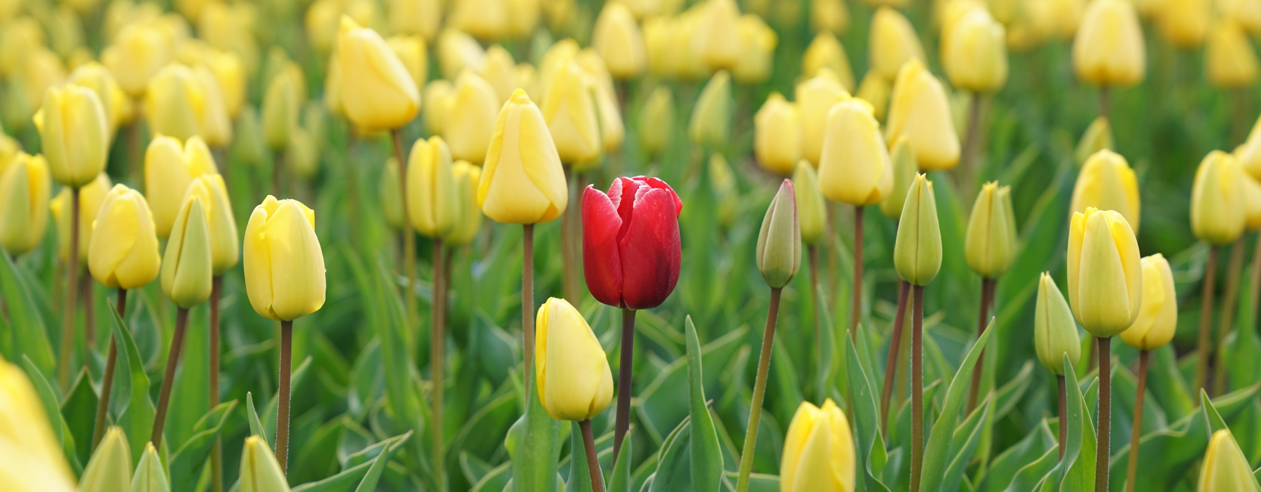 Are you marketing to stand out or stand back?