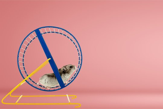 Is Your Go-to-Market Strategy a Flywheel or a Hamster Wheel?
